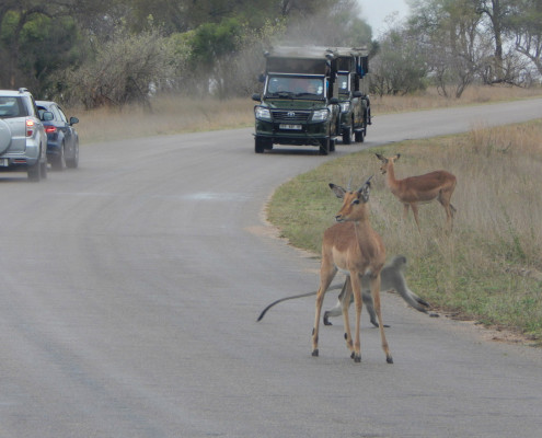 Open game drive vehicle