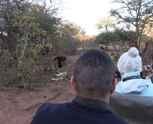 Guests filming lions at a Private Game Reserve