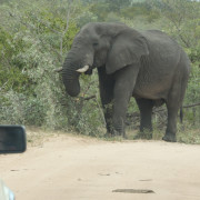 Self-drive in Kruger National Park