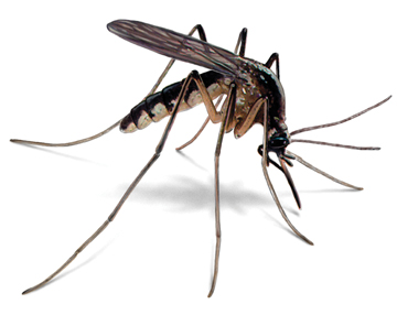 Malaria / Yellow fever low risk in Kruger National Park